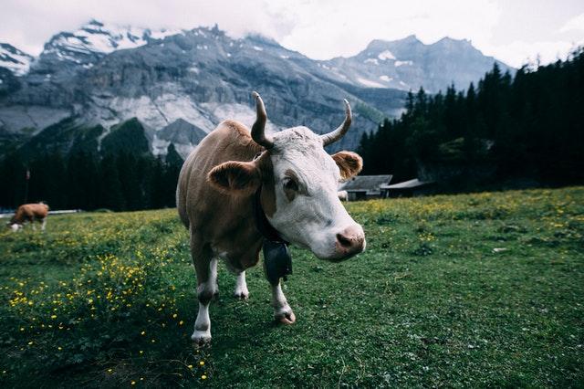 Tanie busy do Szwajcarii